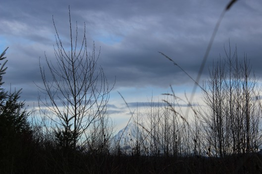Mount Rainier  seen from Kapowsin today.