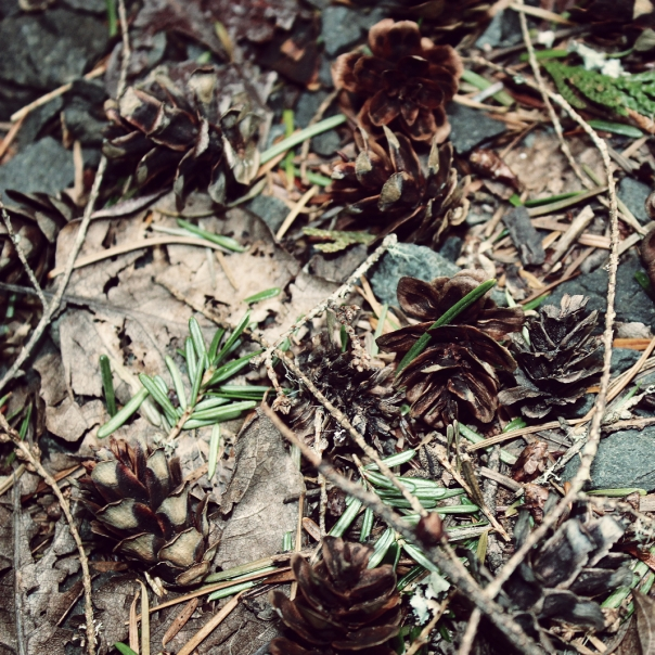 cones on the forest floor