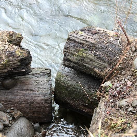 large broken logs