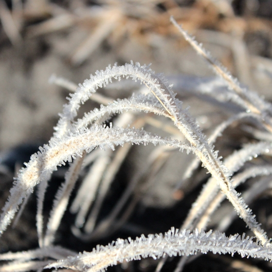 ice crystals on the grass