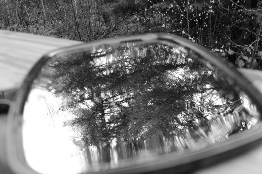 black and white reflection trees