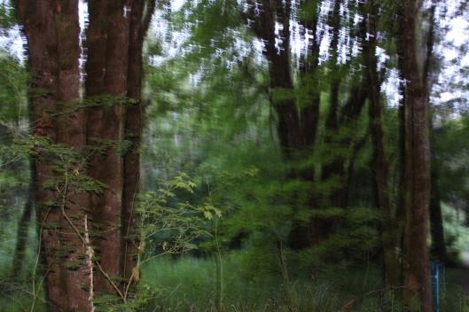 Woodland-204