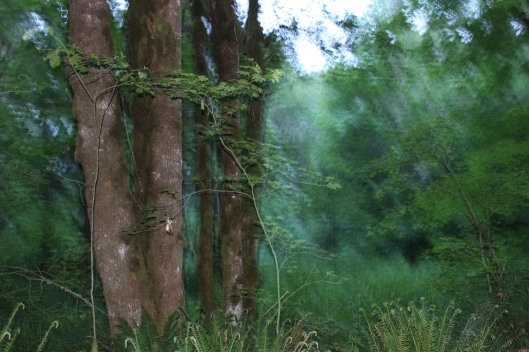 Woodland-207